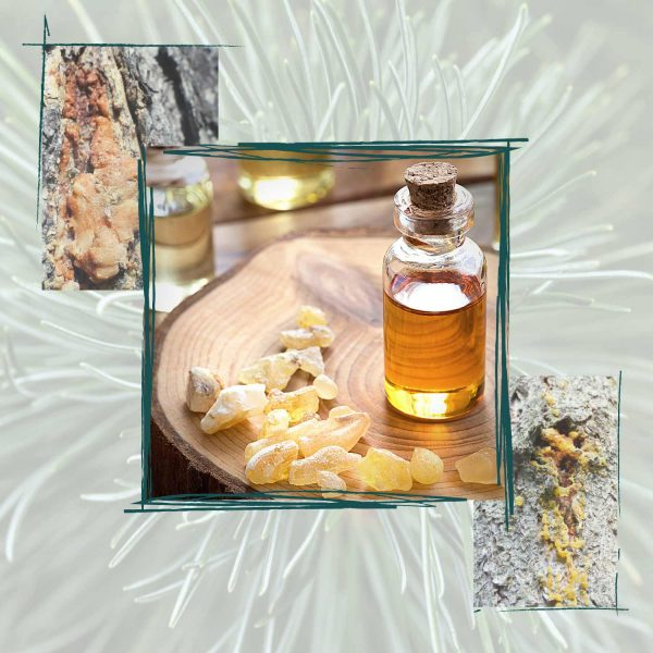 dried tree sap, resin balls, and glass bottle with resin oil over a pine needle background